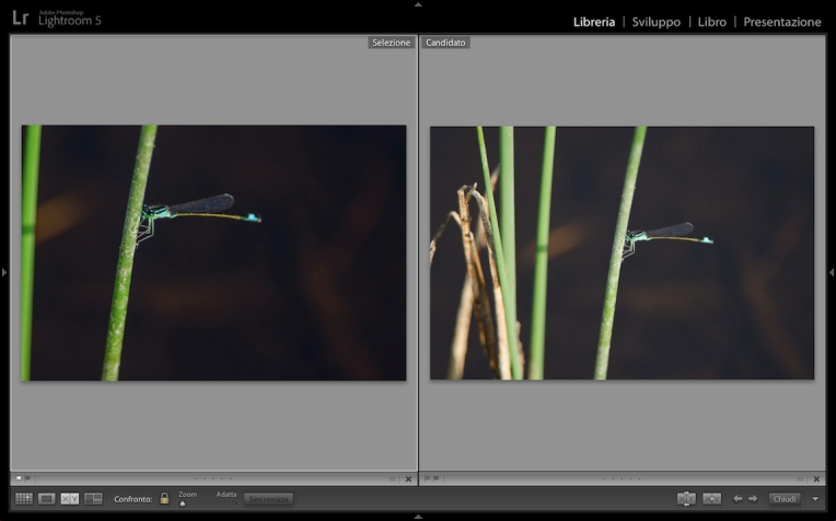 Lightroom5-Vista-Confronto