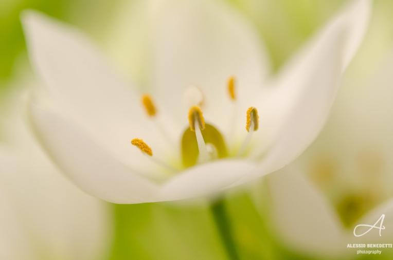 Fotografare-fiori
